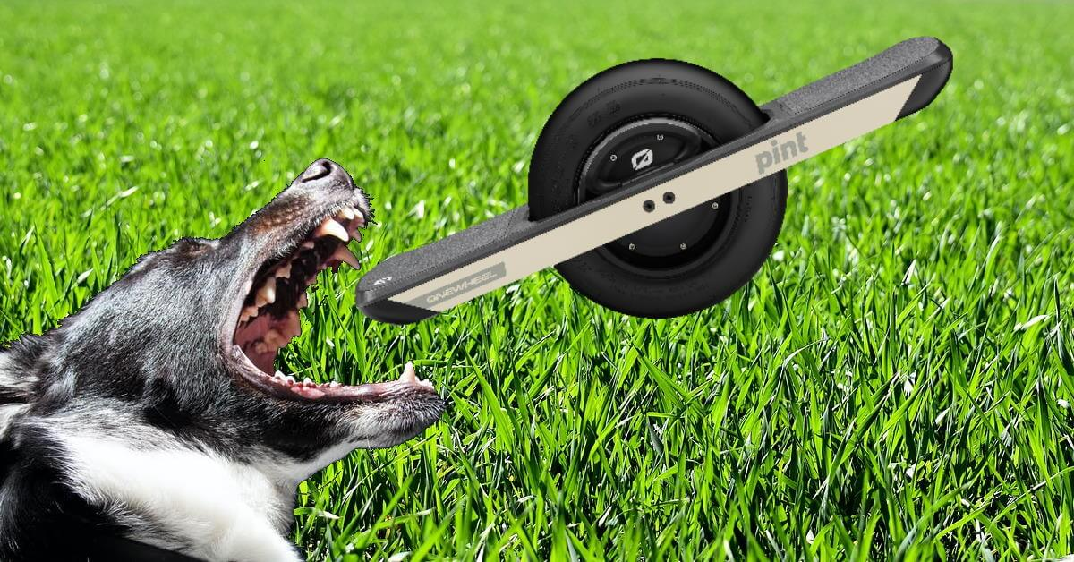 Why dogs hate Onewheels